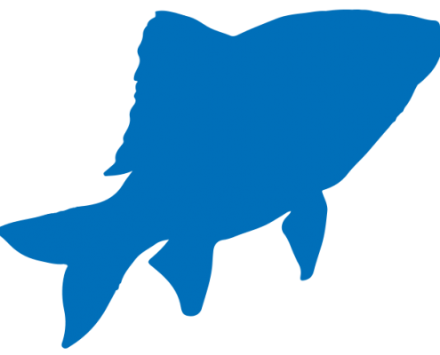 Bouillon Brothers vis blauw